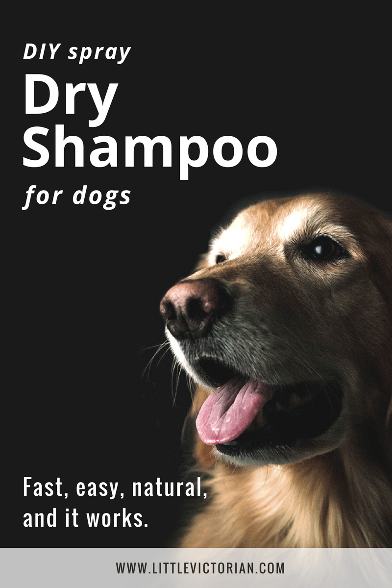 Spray DIY dry shampoo for dogs